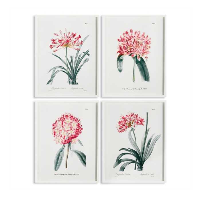 Agapanthus Art Prints