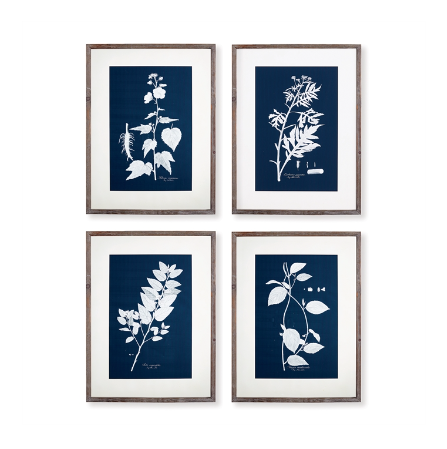 Cyano Botanical Art Prints