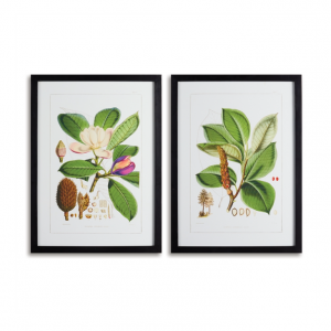 Magnolia Art Prints