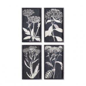 Black and White Botanical Art Prints