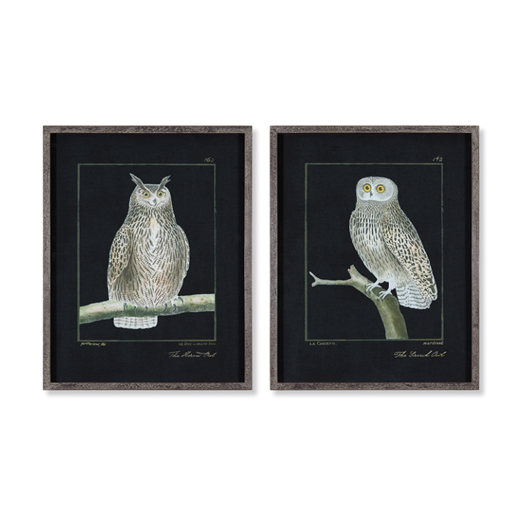 Owl Art Prints