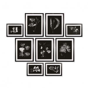 Gallery Botanical Art Prints Black and White