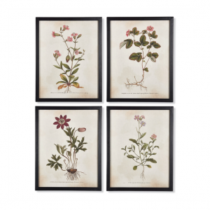 Wildflower Botanical Art Prints