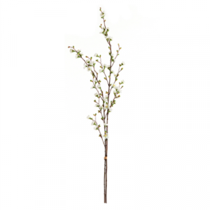 Quince Blossom Branch